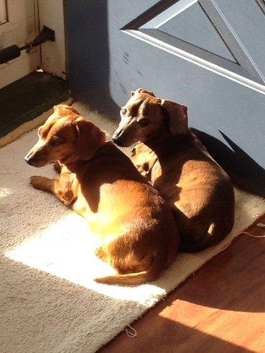 Dogs in sunlight.