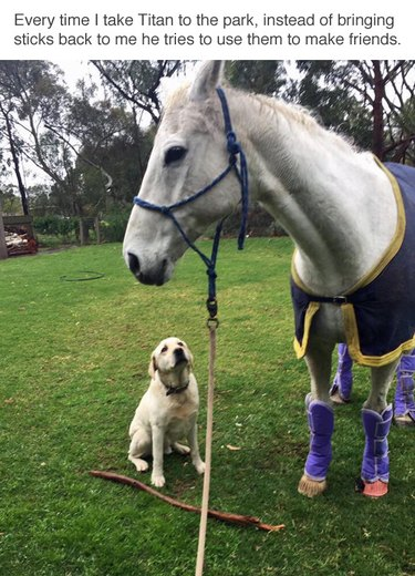 Dog presenting horse with a stick.