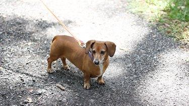 Dog on macrame leash
