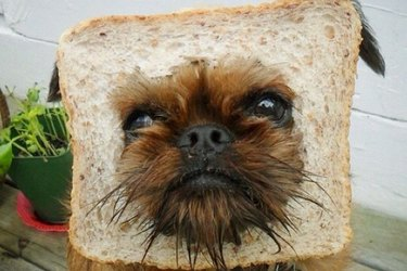 Is Flour Bad For Dogs?