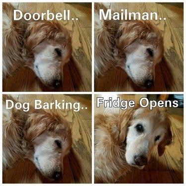 """Three photos of sleeping dog captioned """"Doorbell.. Mailman.. Dog Barking.."""" and fourth photo of dog waking up captioned """"Fridge Opens"""""""