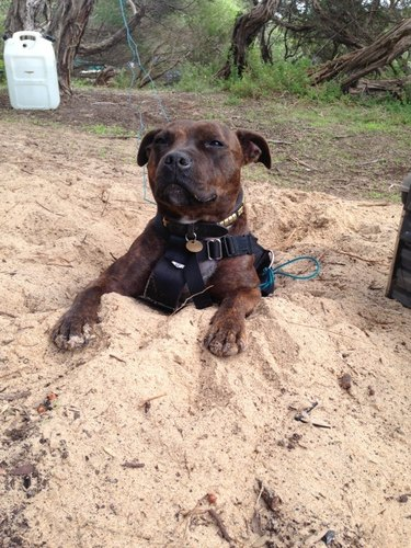 Dog sits in hole.