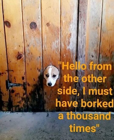 Dog sticking its head through a fence.