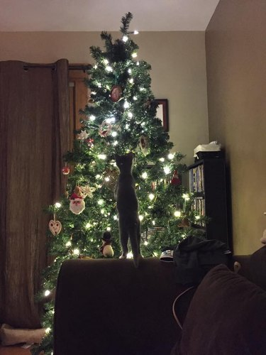 Kitten in front of lighted Christmas tree
