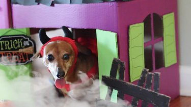 Dog in devil costume sitting inside haunted pet house