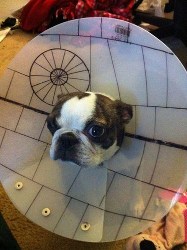 Star Wars Death Star dog