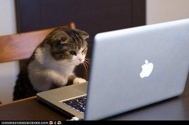 Cat looking at laptop screen.