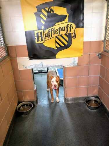 Florida shelter boosts dog adoptions with help from Harry Potter