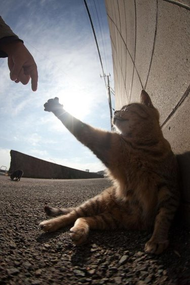 Cat reaching out for human's hand