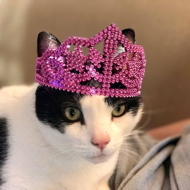 Cat wearing a pink tiara