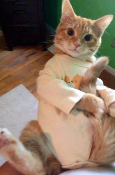 These 15 Photos Of Pets In Pajamas To Look At Before Bedtime