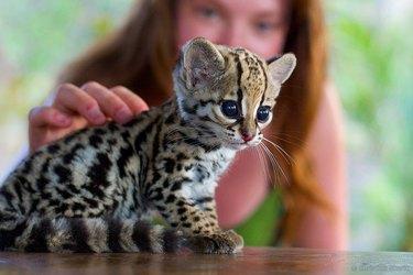 Tiny, Tiny Baby Animals That Will Melt You
