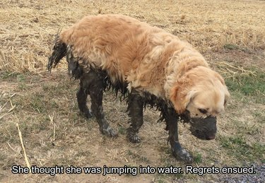 Dog halfway covered in mud.