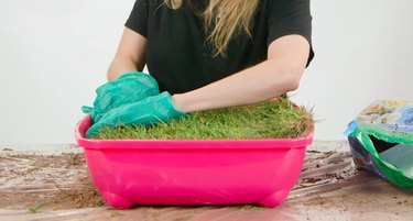 indoor cat grass diy