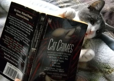 Cat reading a book about cat crimes