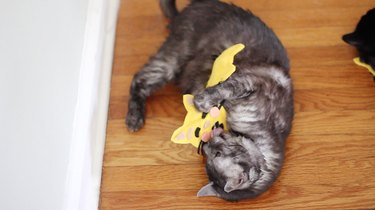 Cat playing with emoji toys