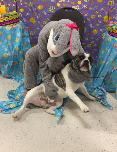 Dog doesn't like posing with Easter Bunny