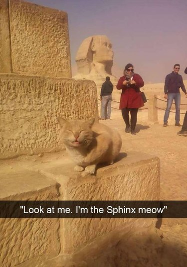 This week in cats