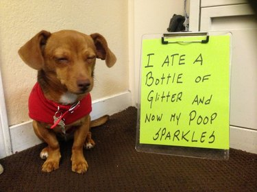 The Greatest Dog Shamings of All Time