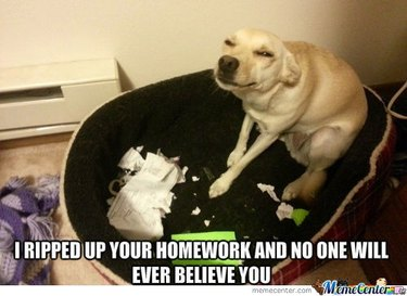 """Dog sitting next to ripped paper with caption: """"I ripped up your homework and no one will ever believe you."""""""