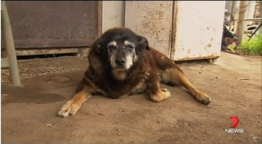 Maggie, the world's oldest dog