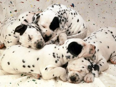 The 35 Sleepiest Puppies To Ever Take A Nap In 2017