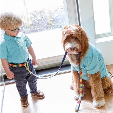 Dog taking toddler for a walk