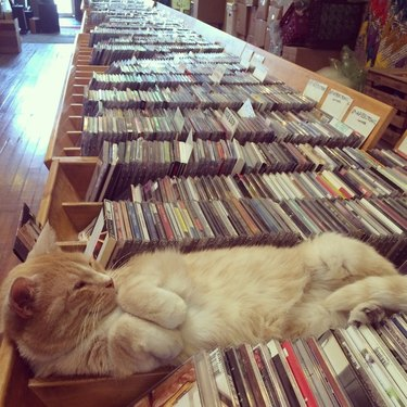Cat sleeping on CD's in a music store