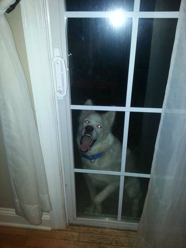 Pets Who Are Ready to Come Inside Now