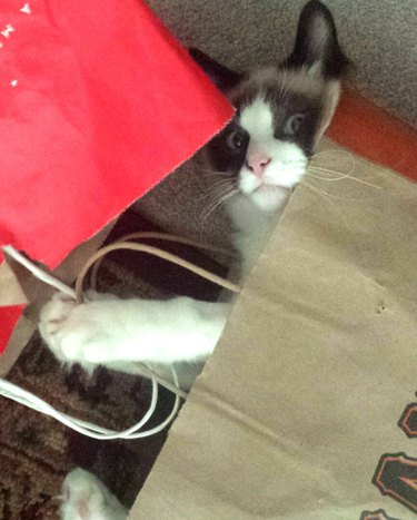 Cat playing in bags