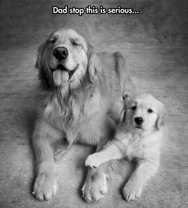 Dog and puppy.