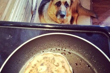 WATCH: Fire Nearly Breaks Out After Good Boy Steals Pancake From Stovetop