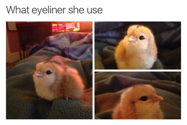 Chick with dramatic-looking eyes.