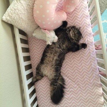 Cat in baby's cradle