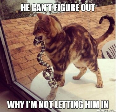 Cat with a snake trying to get inside