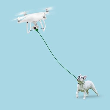 Would you trust a drone dog walker?
