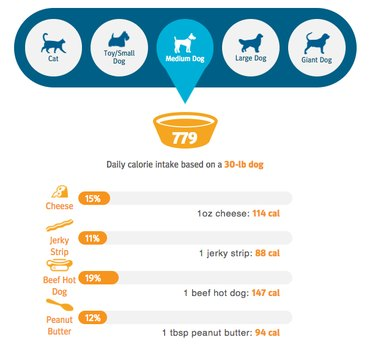 Graphic of a dog's food needs.