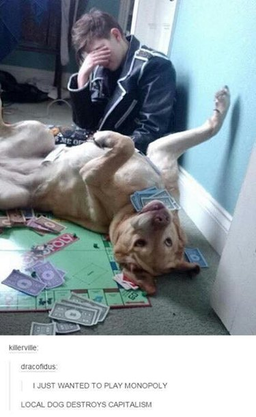 Dog ruining game of Monopoly.