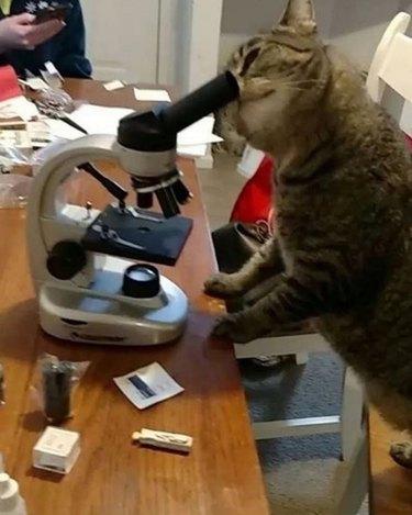 Cat looking through telescope