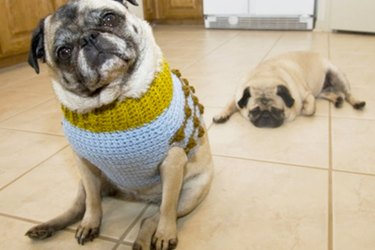 23 Things You Know When You Try To Put A Sweater On A Dog