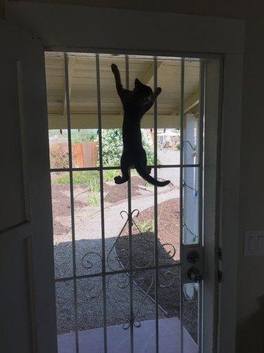 buddy climbing door