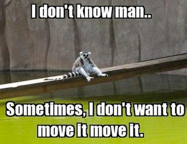 Lemur looking sad.