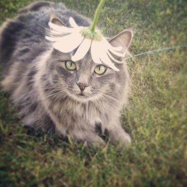 Cat wearing flower on head