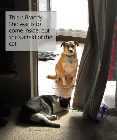 """Dog looking through glass door at cat, caption: This is Brandy. She wants to come inside, but she's afraid of the cat."""""""