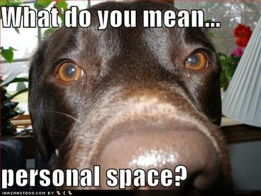 personal space dog meme