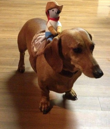 Weiner dog ride