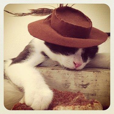 Cat in vintage hat.