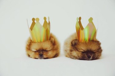 Two puppies wearing paper crowns