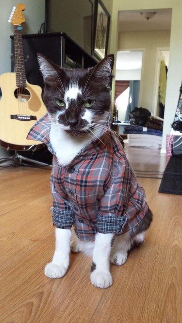 Cat in flannel