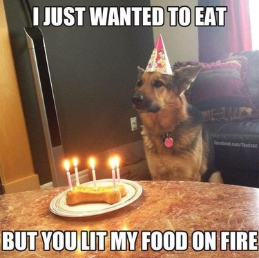 Dog wearing birthday hat in front of dog biscuit with candles in it